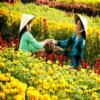 đồng tháp vườn hoa sa đéc